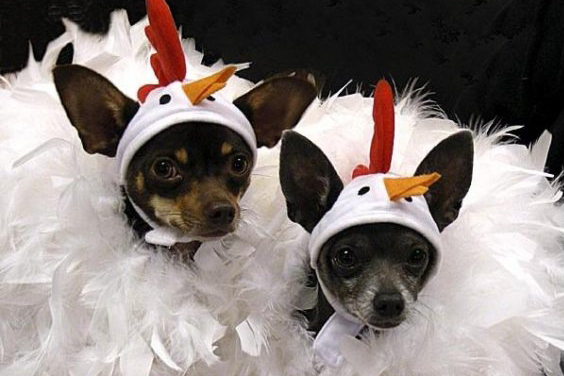 Haute Dog Costume Contest